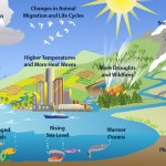 Clues of climate change