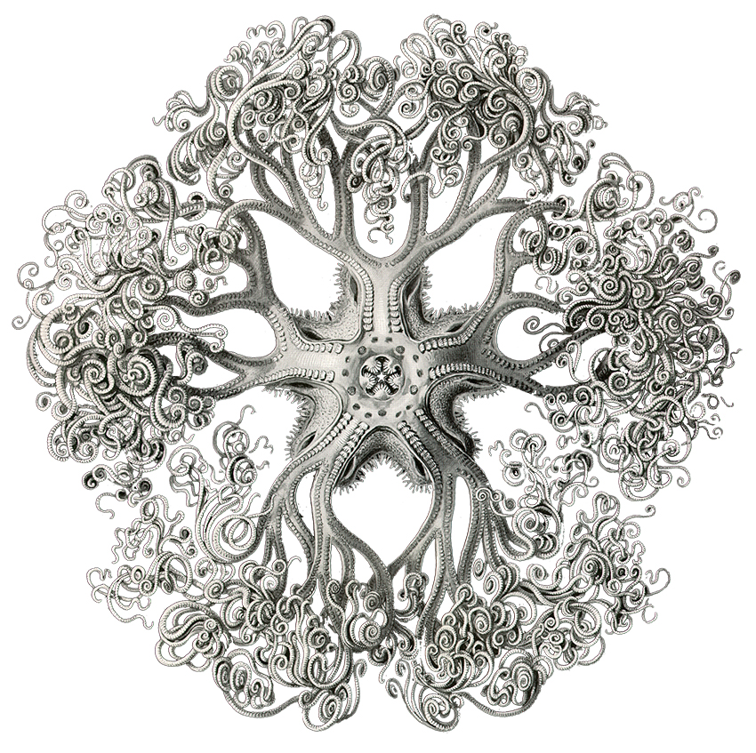 *ernst haeckel biology nature science sea creature tentacles octopus tendrils illustration text book art copy