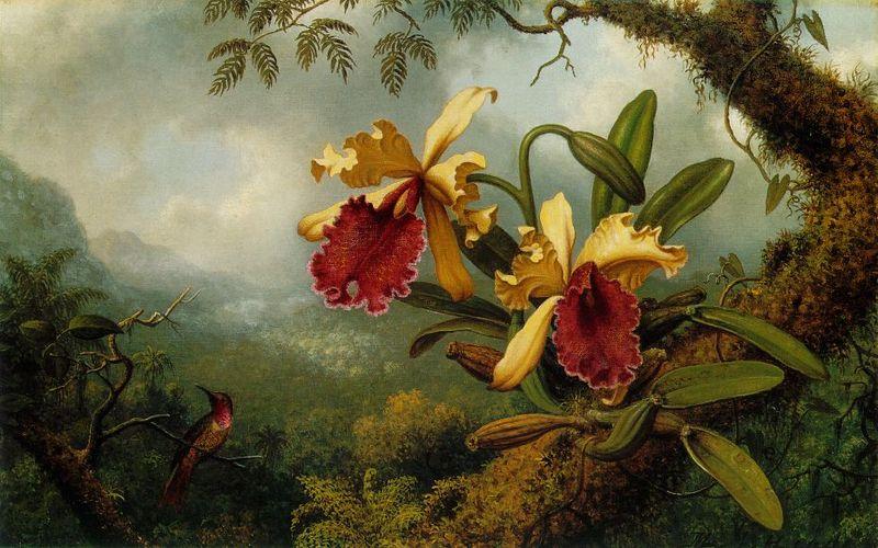 800px-Martin_Johnson_Heade_-_Orchids_and_Hummingbird_ATC